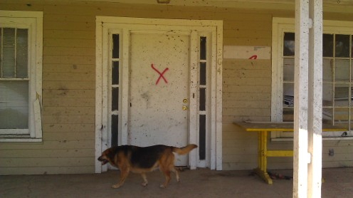 my red x, and my dog The Bug. (photo by Tanya Mikulas)