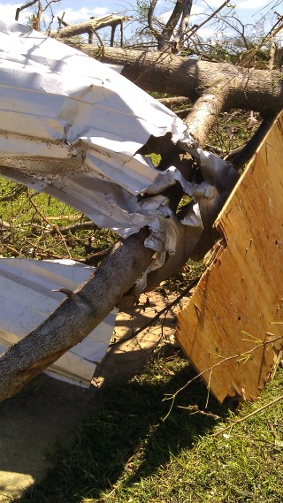 look at how the metal from the school roof (probably) got twisted on this branch. (photo by Tanya Mikulas)