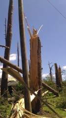 Splintered trees. (photo by Tanya Mikulas)