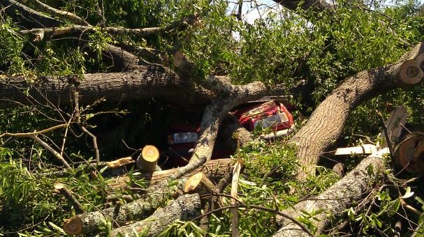 My neighbor's Volvo got smashed pretty bad. (photo by Tanya Mikulas)