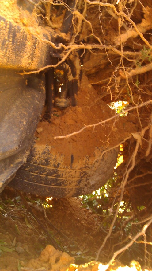 My car was wedged between the root ball and my house. (photo by Tanya Mikulas)