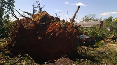 The root ball from this tree was massive. (photo by Tanya Mikulas)