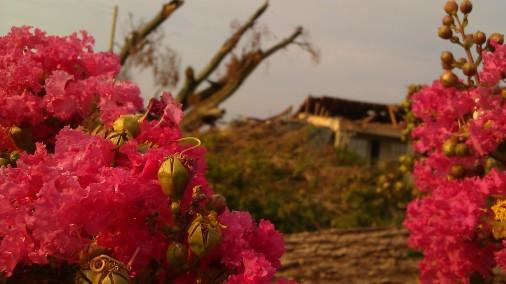 IMAG5759 flower