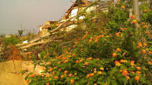 IMAG5779 flower